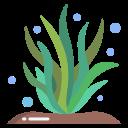 Спирулина (водоросль)