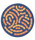 streptocuccus